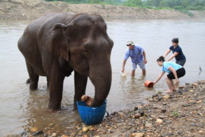 The Elephant Nature Park (Thailand)