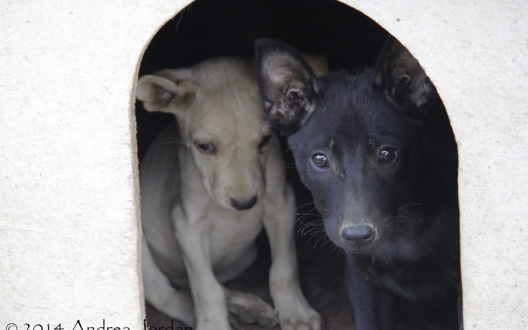 How 200 street dogs stole a piece of my heart