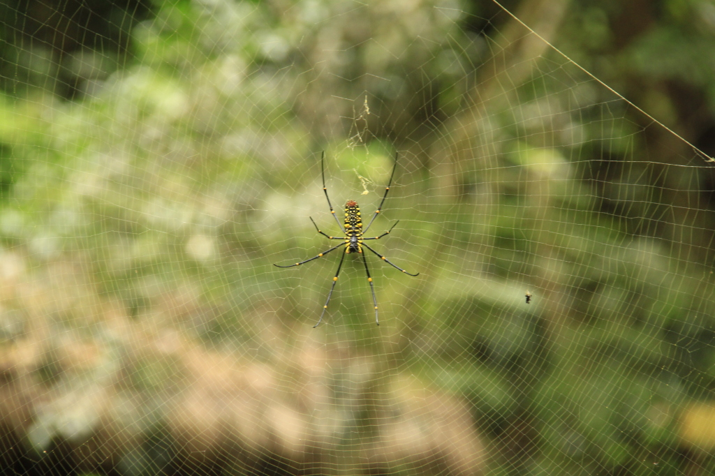 The  biggest spider I've EVER seen!