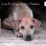 First ever Care for Dogs Calendar (made by me!)