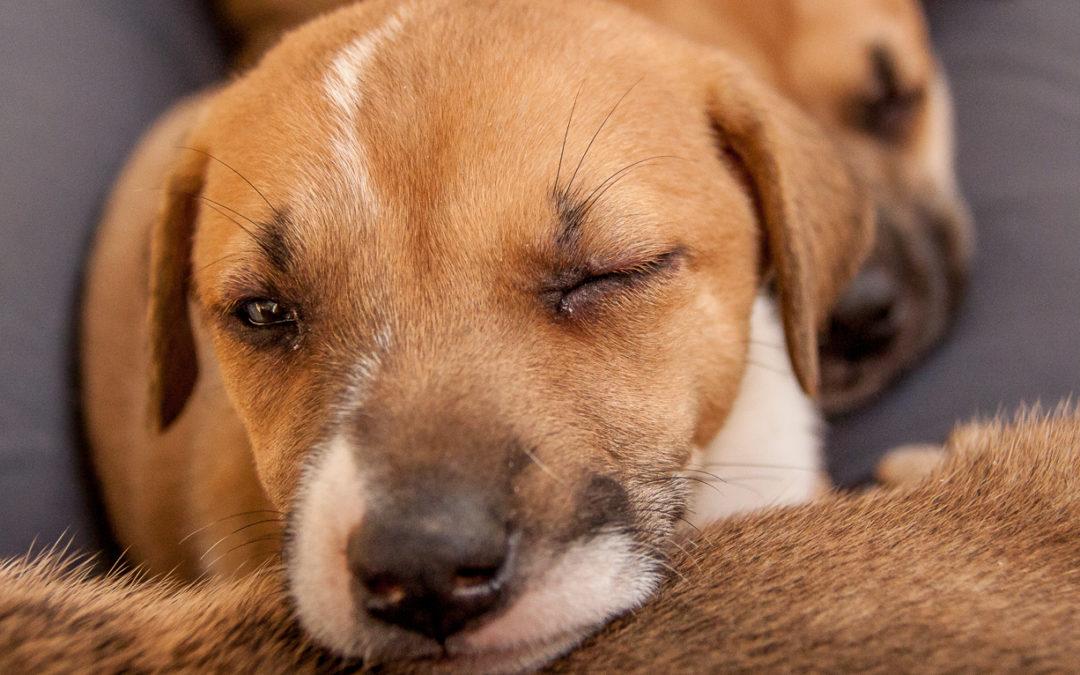 dog shelter mexico