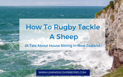 How To Rugby Tackle A Sheep (A Tale About House Sitting In New Zealand)