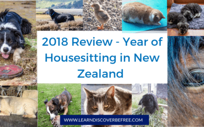 Looking Back At 2018 – A Year Of Housesitting in New Zealand